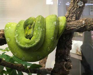 Exkursionen im Biologiepraktikum (Videos)
